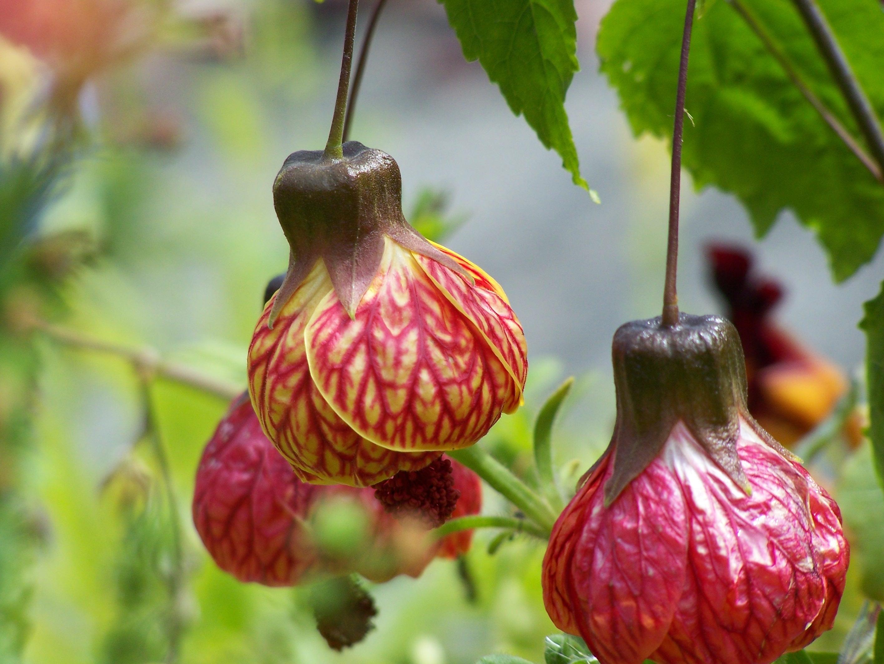 Plant Talk Favorite Plants