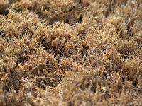 Dormant_Grass1_w200