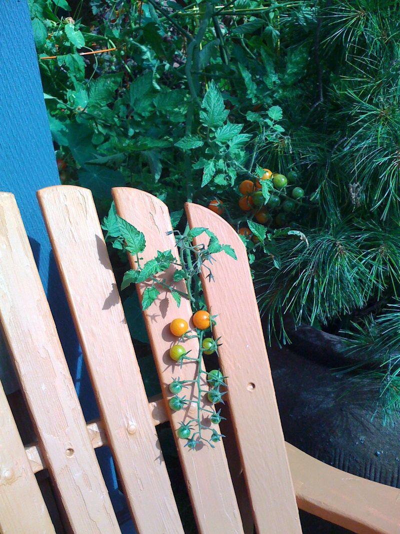 Adirondack:tomato