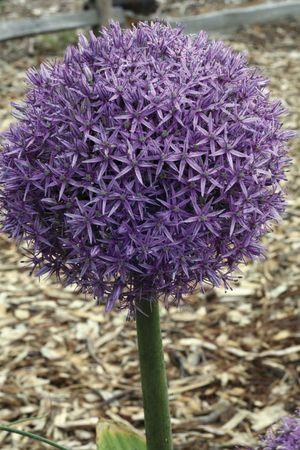 plant talk bulbs, Natural flower