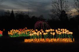 Garden d lights little