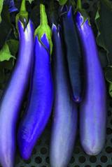 EggplantPingT