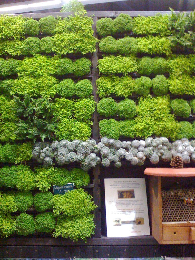 Sedum wall