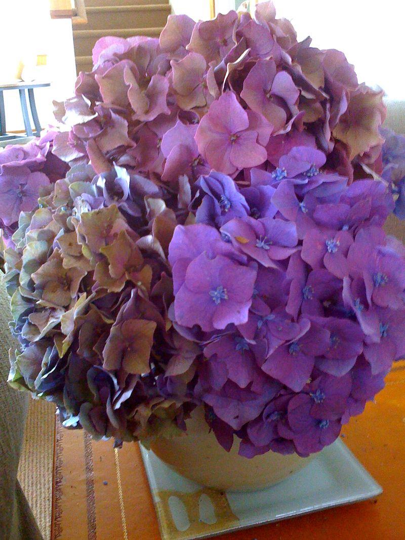 Hdrangea bouquet