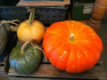 Pumpkinsqu2