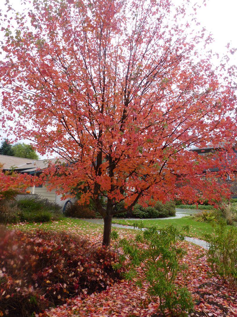 Debbie's tree
