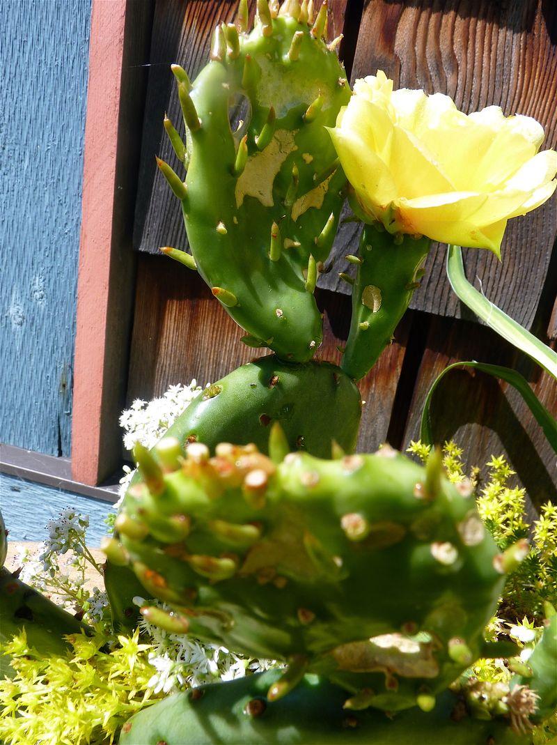 Cacti 1