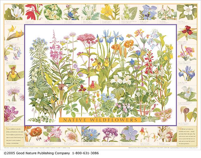Wildflowers-640