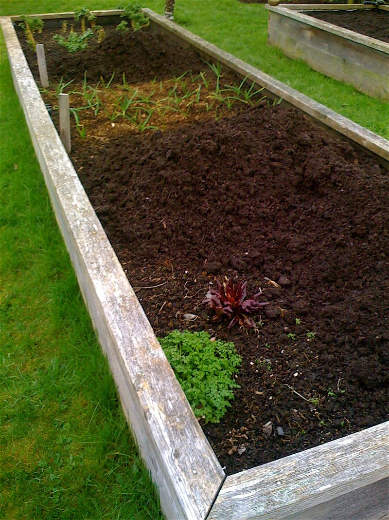 Raised beds 3