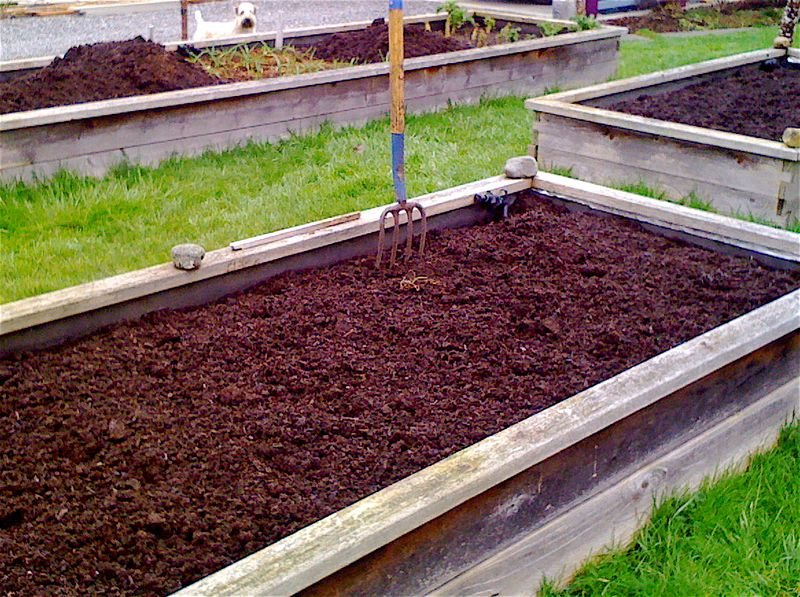 Raised beds 4