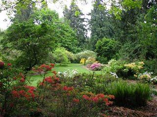 Washington-arboretum-spring