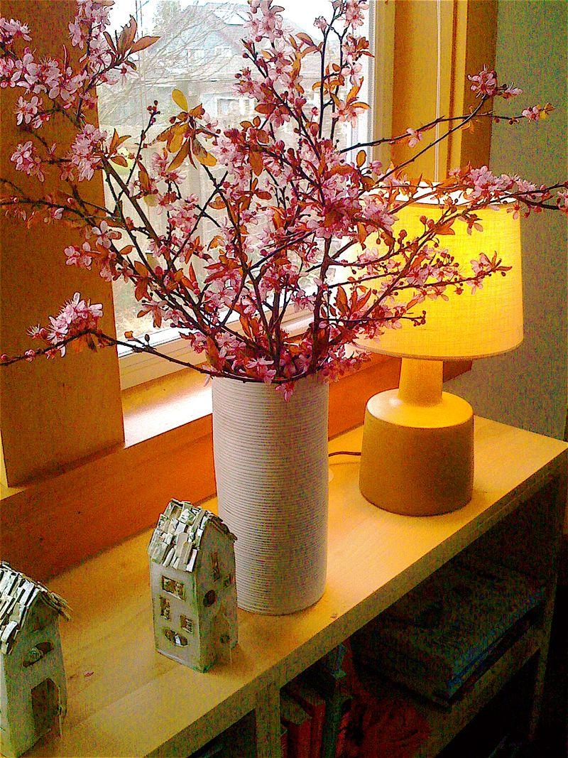 Plum branches
