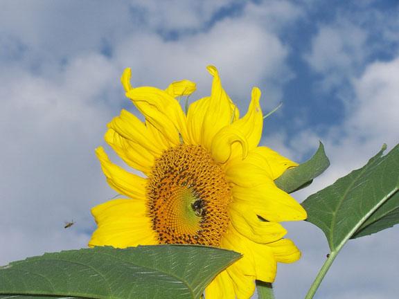 Sunzilla-diffendefer