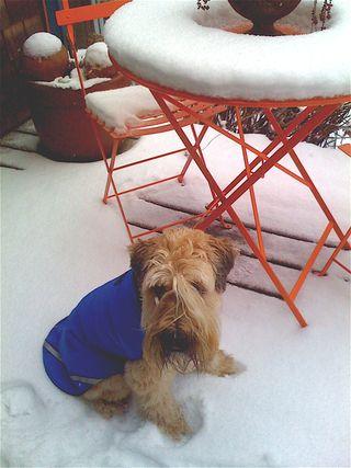Bridget snow