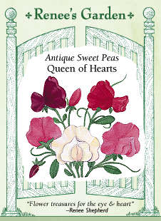Sweetpea-queenhearts-f