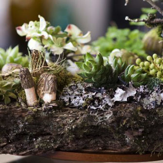 Woodland-arrangement-on-bark-Françoise-Weeks-copy1