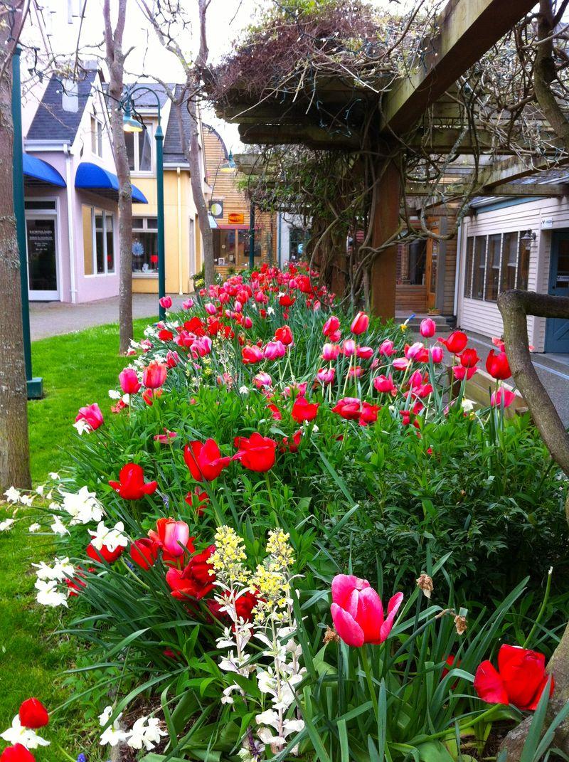 Tulipspring.jp