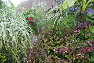 Exotic Garden 26