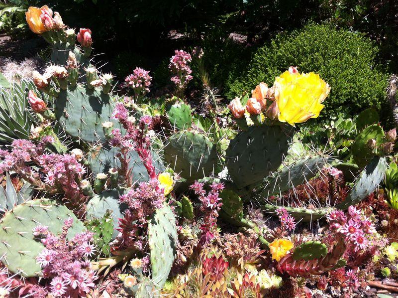 Cactus rocker1
