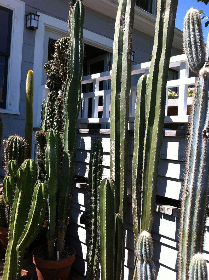 Cactus pot2