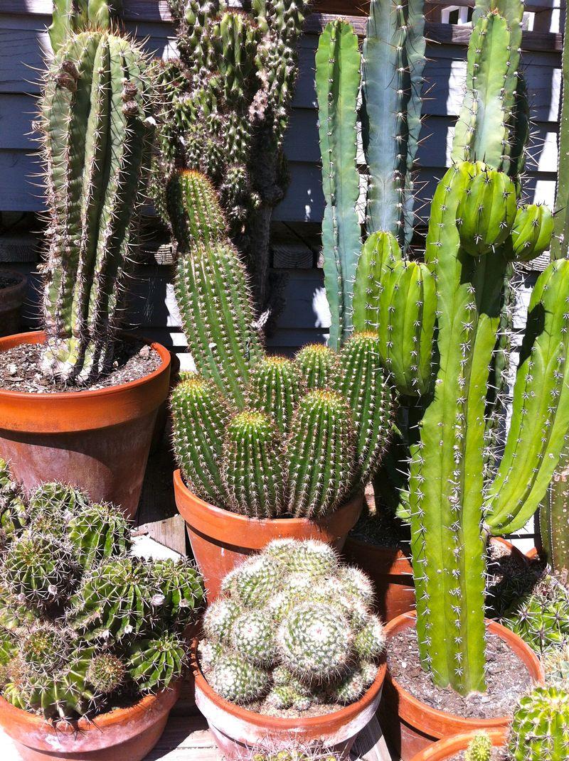 Cactus pot1