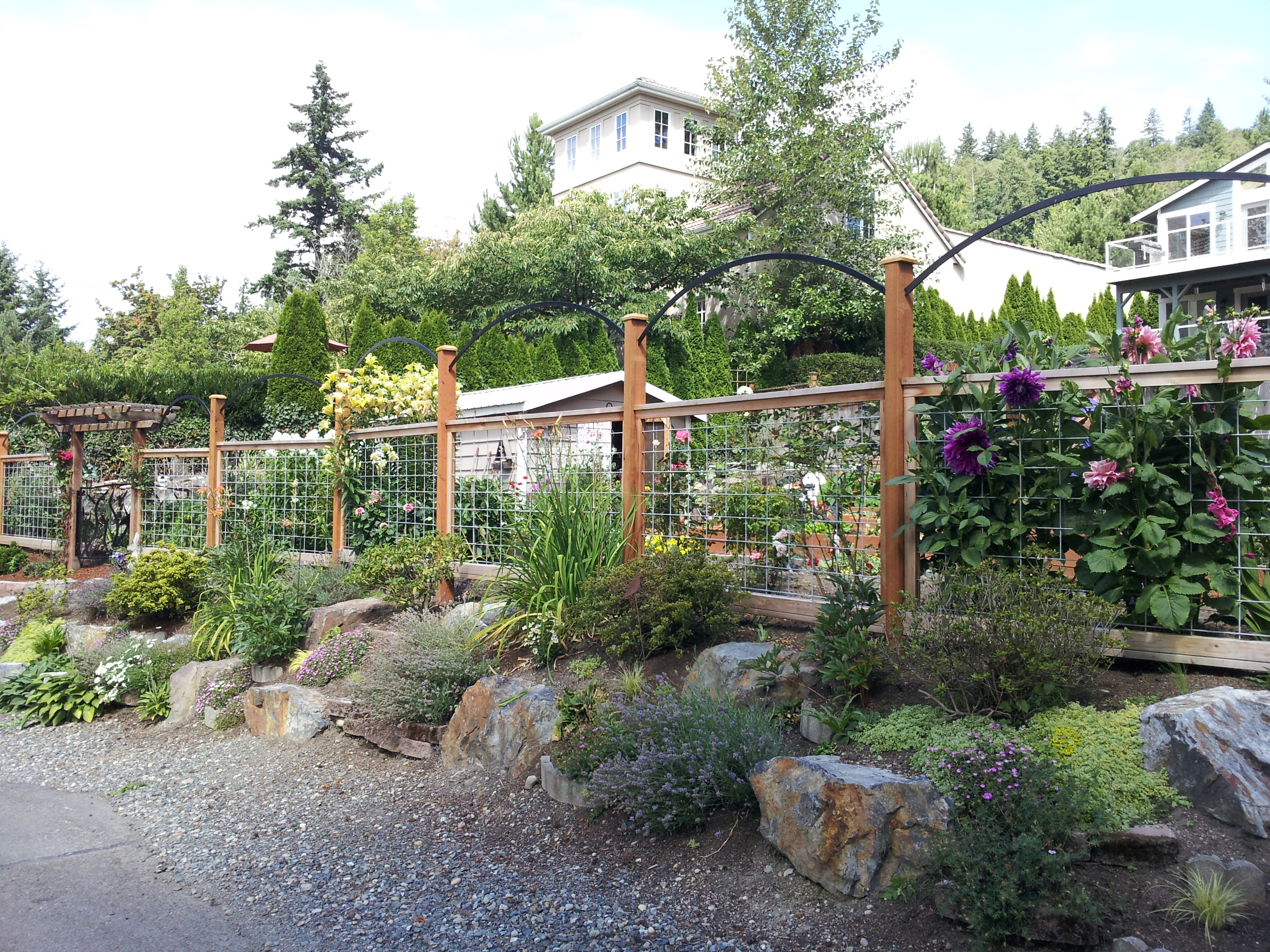 Plant Talk Whidbey Island Deer Fence Inspires A Fresh Design for