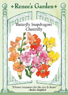 Snapdragon-chantilly-f