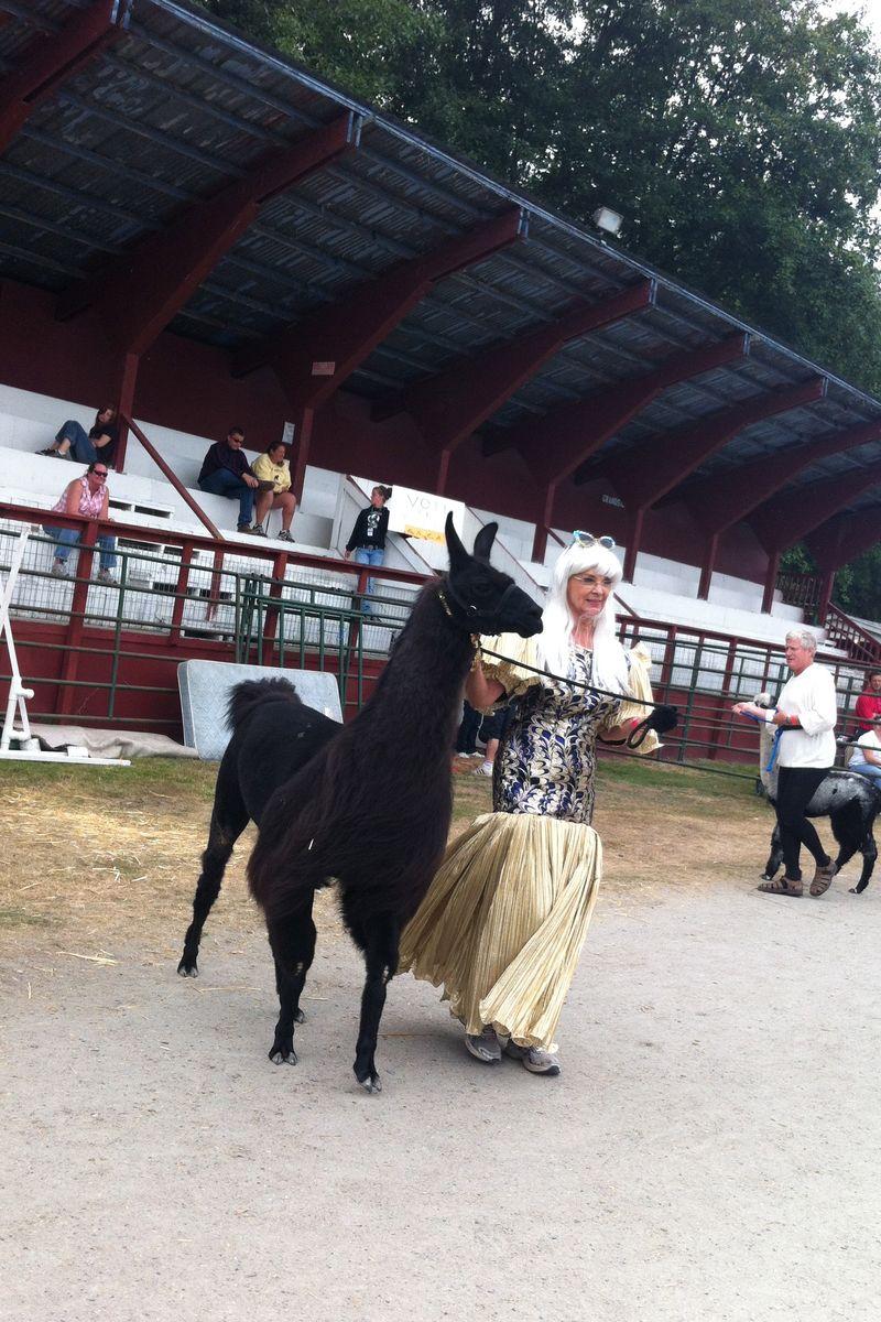Fairy alpaca