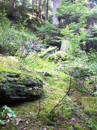 Whistler mossy