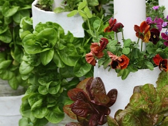 Plant Talk Vee Garden Kickstarter Help Fund Del Webbers