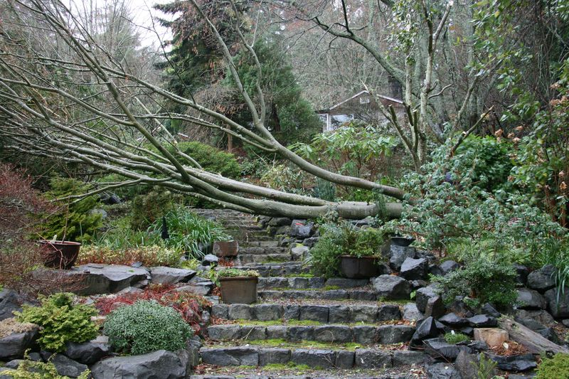 Tree down #1