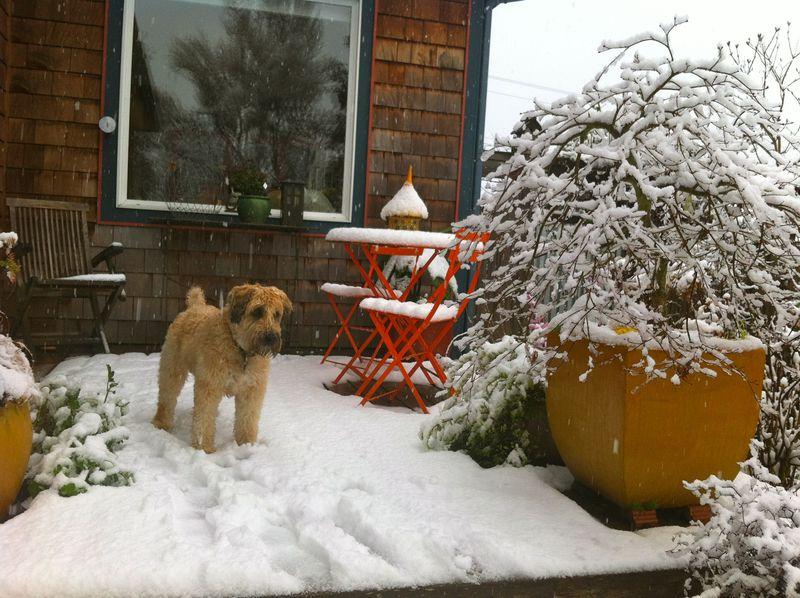 Bridget:snow