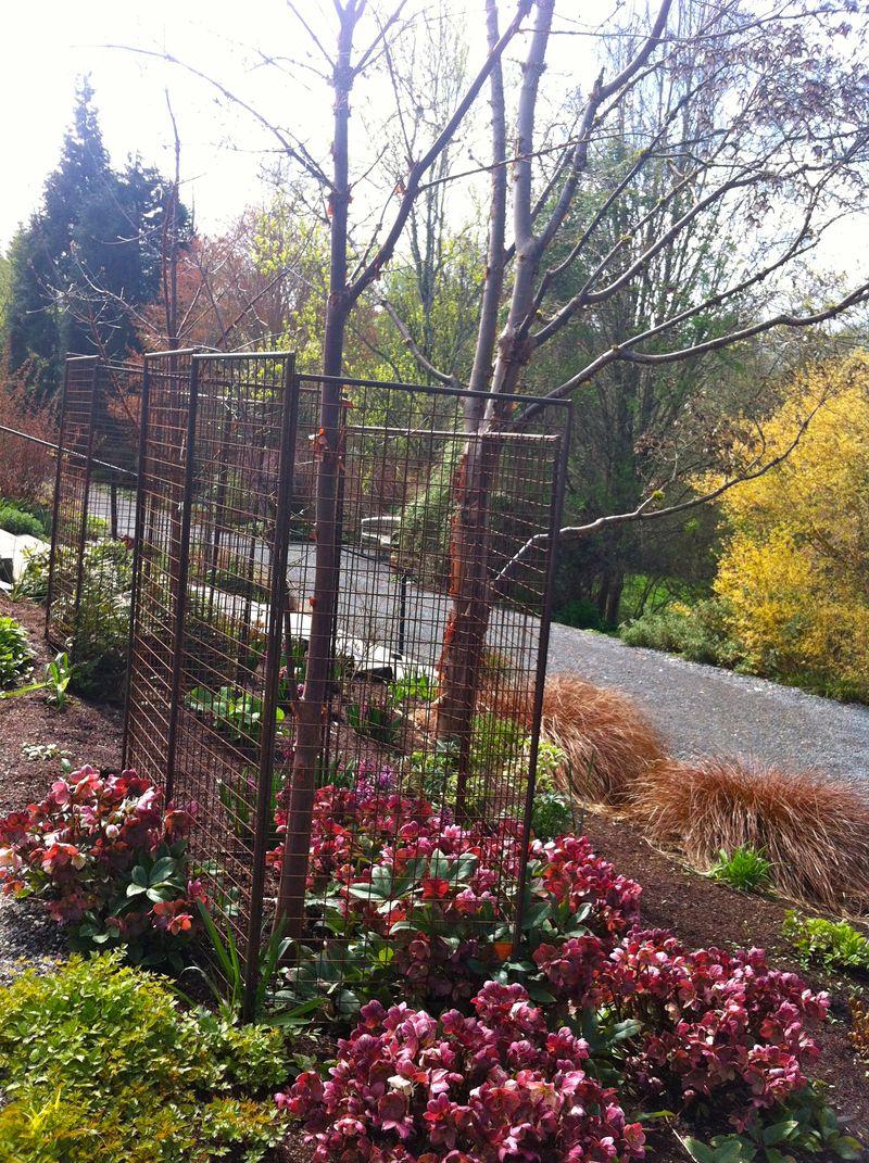 Cage tree