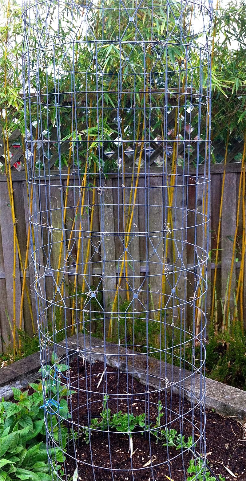 Plant Talk Metal Garden Cages Amp Branches As Art Objects