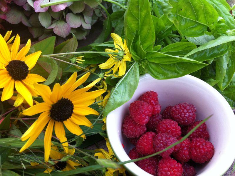 Raspberryharvest