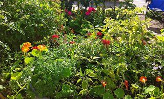 Garden#1