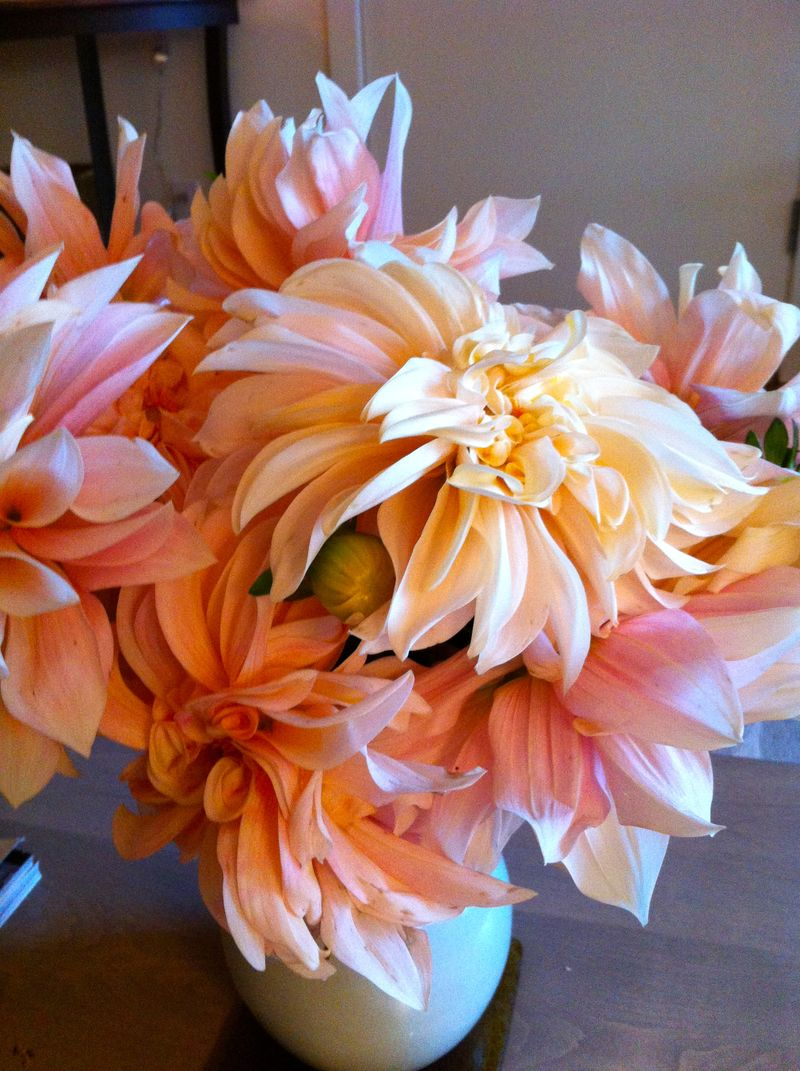 Dahlias copy