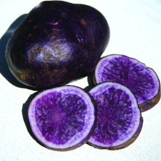 Seed Potato All BlueVAL