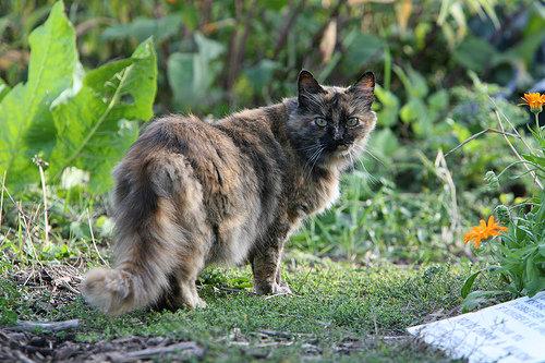 Cat-in-gardenjpg-88fe50ecece05640-1