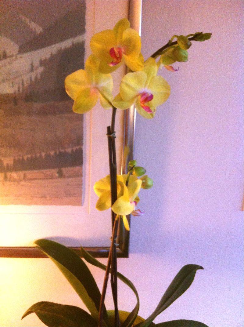 Orchidfar