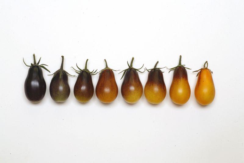 Tomato INDIGO Pear DropsVAL