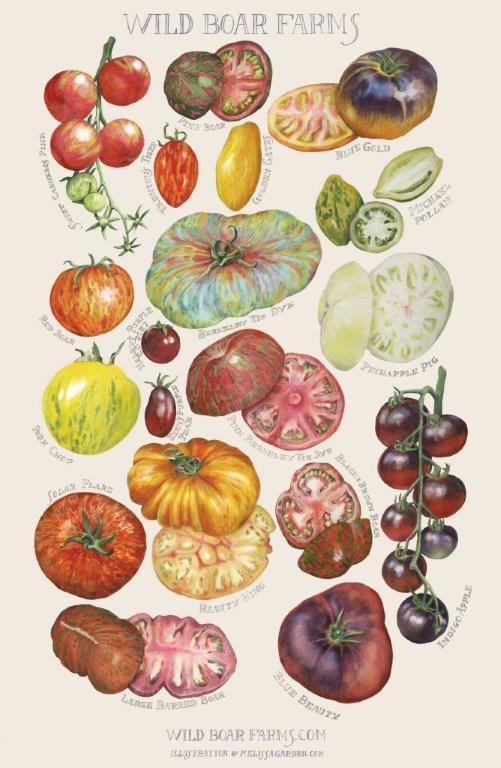 Wild Boar Tomato Print