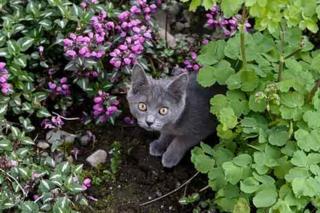 Cute-cat-19