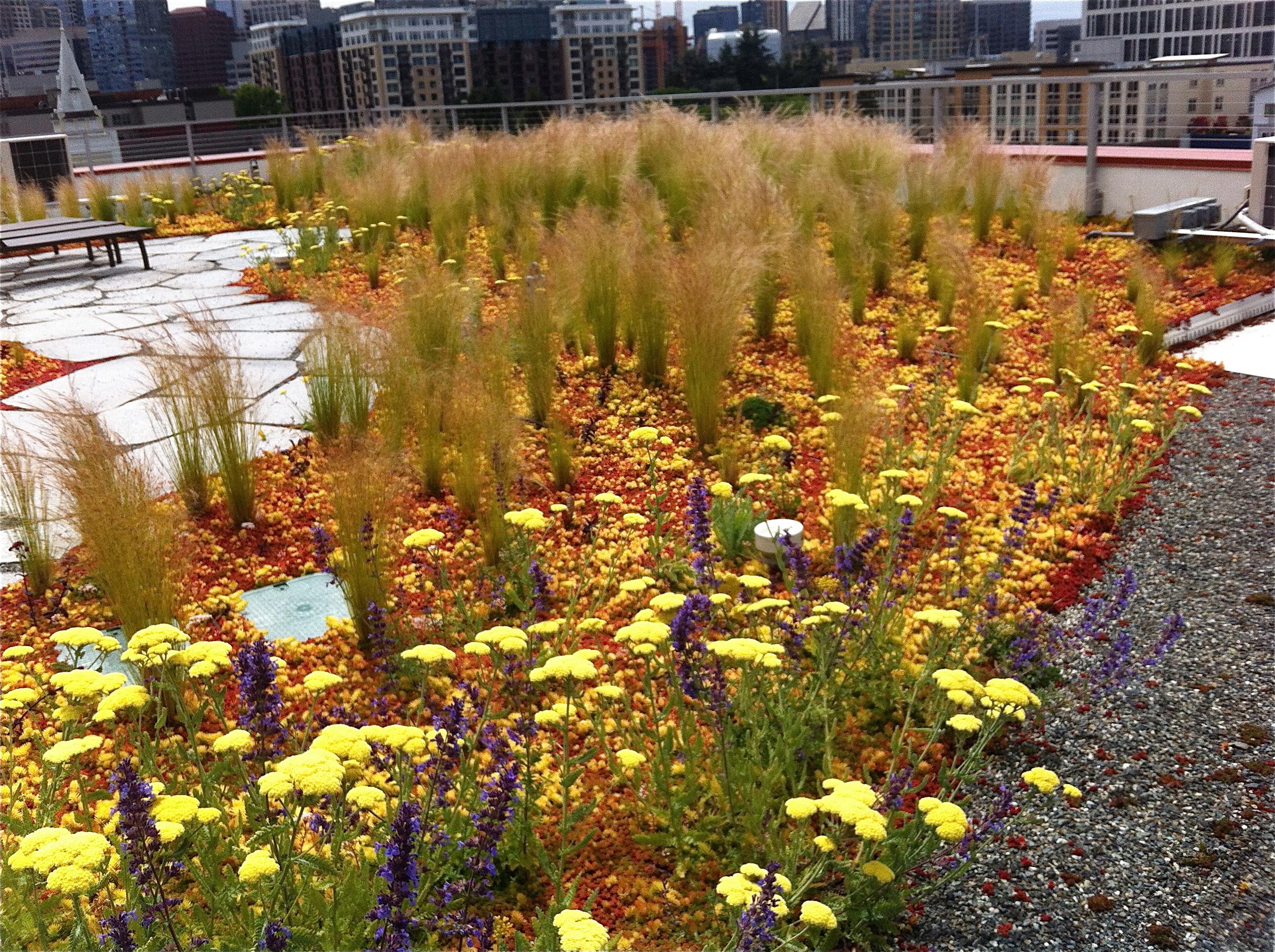 Plant Talk: labyrinths