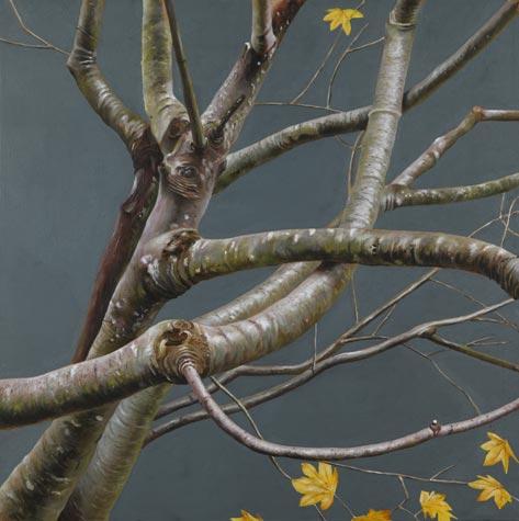 Woods-tree-4